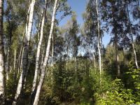 drzewokrzew_742