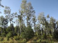drzewokrzew_743
