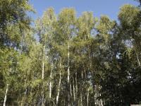 drzewokrzew_745