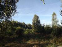drzewokrzew_749