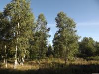 drzewokrzew_750