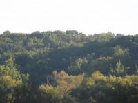 drzewokrzew_752