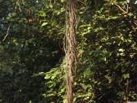 drzewokrzew_754