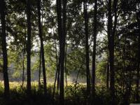 drzewokrzew_755