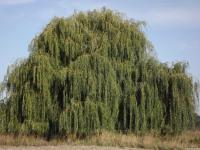 drzewokrzew_756
