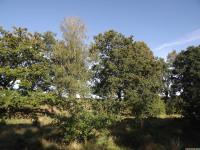 drzewokrzew_758