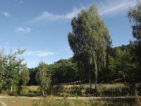 drzewokrzew_759