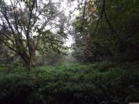 drzewokrzew_762