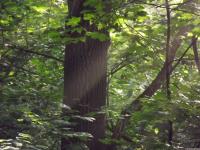drzewokrzew_764