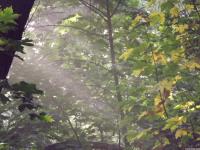 drzewokrzew_765