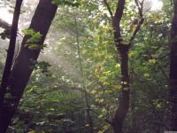drzewokrzew_766