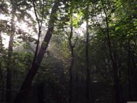 drzewokrzew_767