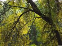 drzewokrzew_768