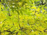 drzewokrzew_770