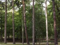 drzewokrzew_771