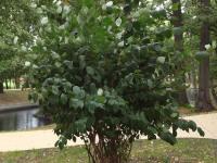 drzewokrzew_772