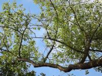 drzewokrzew_779