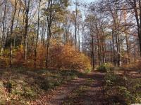 drzewokrzew_796