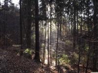drzewokrzew_797