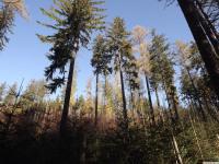 drzewokrzew_798