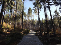 drzewokrzew_799