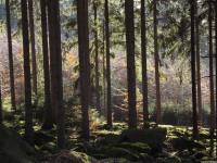 drzewokrzew_800