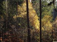 drzewokrzew_801