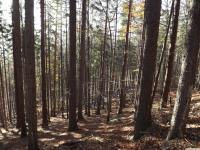 drzewokrzew_802