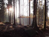 drzewokrzew_803