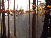drzewokrzew_804