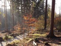 drzewokrzew_805