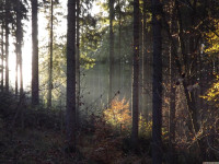 drzewokrzew_807