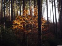 drzewokrzew_808