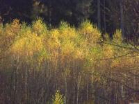 drzewokrzew_810