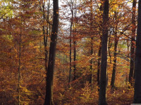 drzewokrzew_813