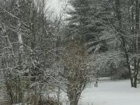 drzewokrzew_856