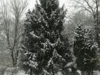drzewokrzew_857