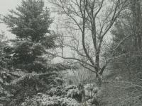 drzewokrzew_858