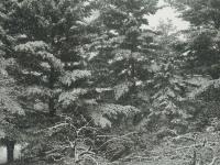 drzewokrzew_859