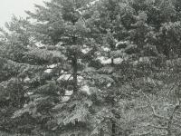 drzewokrzew_860