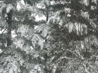 drzewokrzew_861