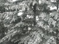 drzewokrzew_862