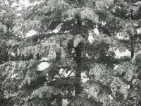 drzewokrzew_863