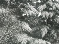 drzewokrzew_864