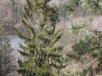 drzewokrzew_883