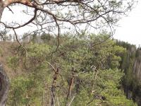 drzewokrzew_885