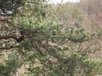 drzewokrzew_886