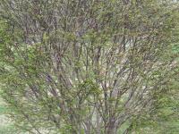 drzewokrzew_894