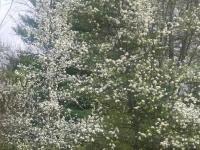 drzewokrzew_898