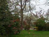 drzewokrzew_904